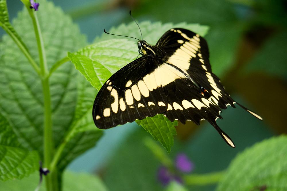 Papiliorama – Kerzers